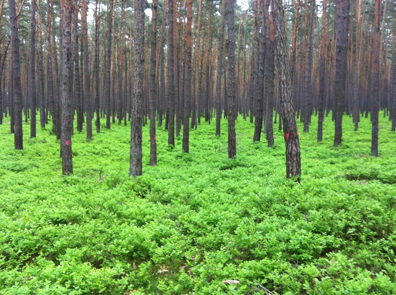 Wald kleiner