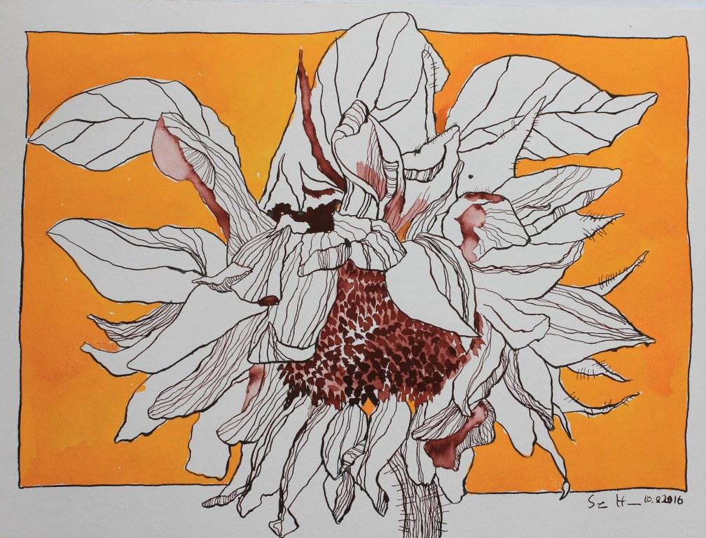 Sonnenblume - 30 x 40 cm (c) Zeichnung von Susanne Haun